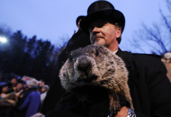Punxsutawney+Phil+Makes+Appearance+Groundhog+Vr2QEDkMRpel